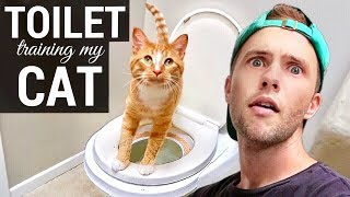 Toilet Training My Cat!