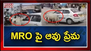 Cow chases MRO car in Telangana, viral video..