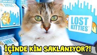 Bir Kutu Lost Kitties Sürpriz Paketi | Meraklı Kedi Luna | Full Box | Zep'in Oyuncakları