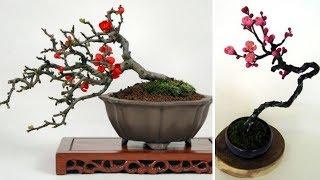 """Chán đào """"khủng"""", dân Hà Thành săn lùng đào bonsai 2 gang tay"""