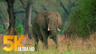 5K African Wildlife Video - Mana Pools National Park - 2017 by Robert Hofmeyr