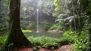 1 Hour of Rain Forest Noises | ASMR