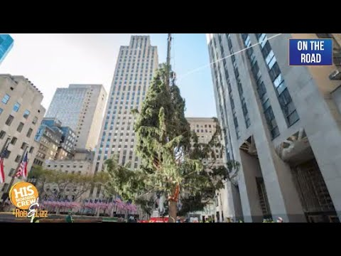 Have you seen the Rockefeller Center Tree? It's something.