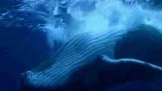 サメ -真実7-