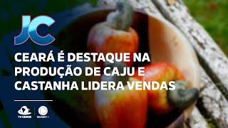 Ceará é destaque na produção de caju e castanha lidera vendas