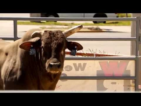 AGRI BEST FEEDS   SWEETPRO'S LONG JOHN HD