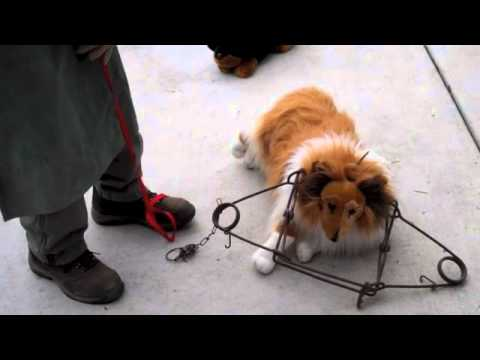 Traps and Pet Safety Part Five