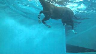 Equine Rehabilitation Center | Swimming Underwater View