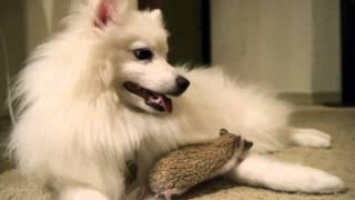 ハリネズミと犬のふれあい