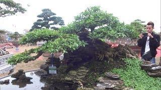 Khách thăm quan quá thích cây này, bao nhiêu tiền vậy - beautiful small scene at bonsai exhibition