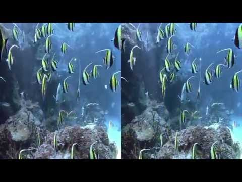 3D EXTREME Aquarium | Side by Side SBS VR Active Passive