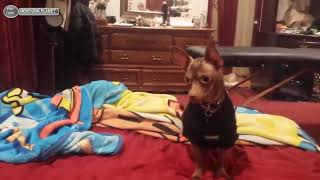 Amazing!! Top Funny cats And Dogs ll Angry Cats VS Dogs ll Funny Compilation 2019 !!!
