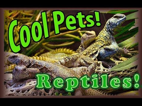 Cool Pets! Reptiles - YouTube