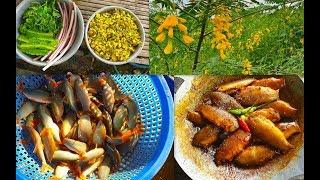Ghé chợ cá đồng Sa Đéc, mua đủ loại cá heo sông, chạch lấu, bông điên điển cho bữa cơm quê ngon