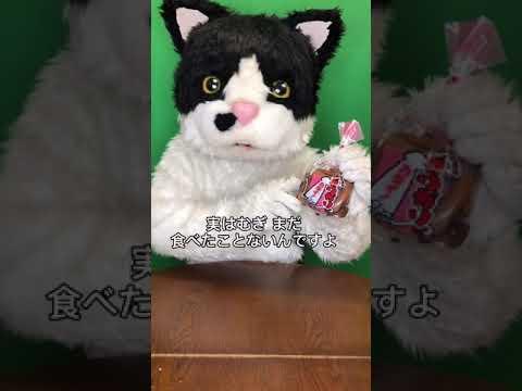 むぎ(猫)「沖縄こんちくわシリーズvol.4いちゃガリガリ」
