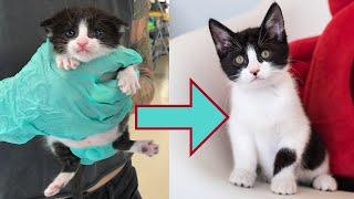 Swimmer Kitten Grows Up BEAUTIFULLY! (Apple Update)