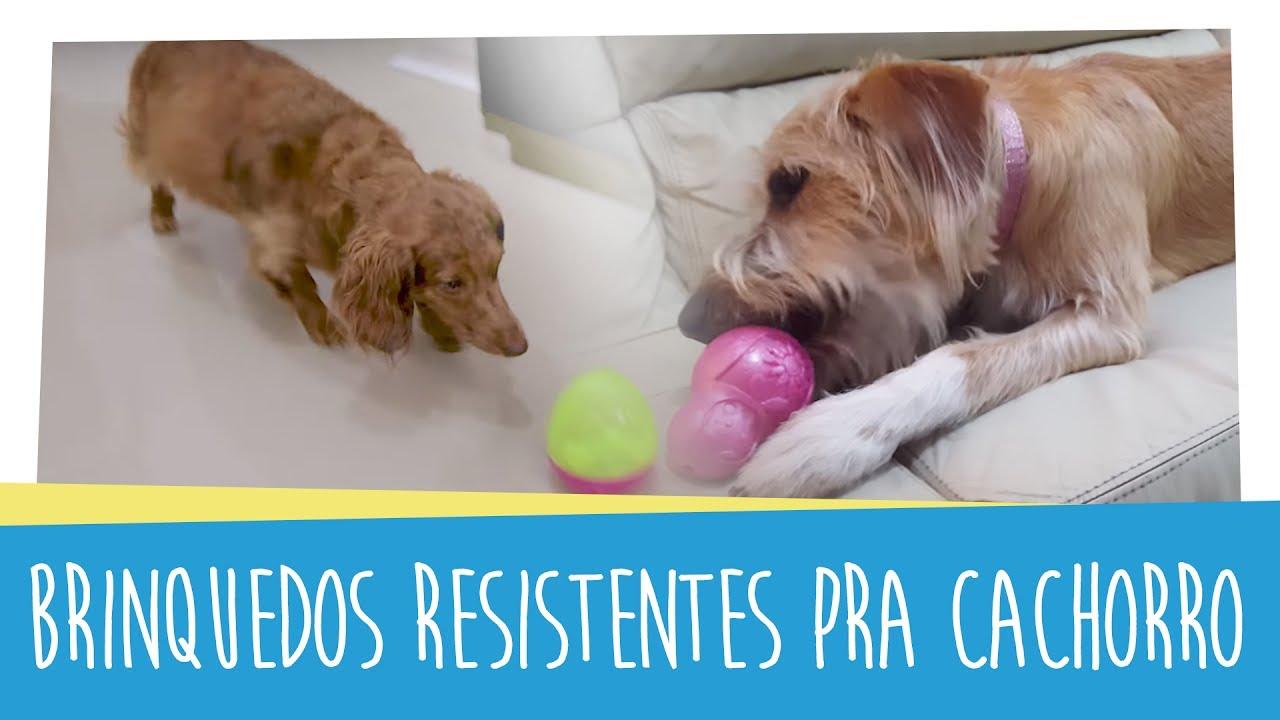 Ju Almeida Pet - Brinquedos resistentes pra cachorro