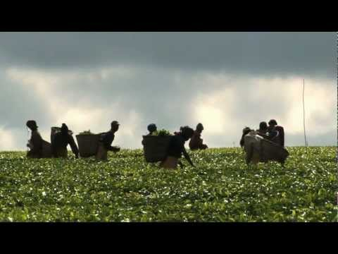 World Food Day 2012 video feature: Agricultural Cooperatives