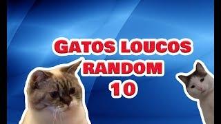 Gatos engraçados e Loucos Random #10 - Funny and Crazy Cats