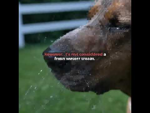 Water Intake for Dogs at Home