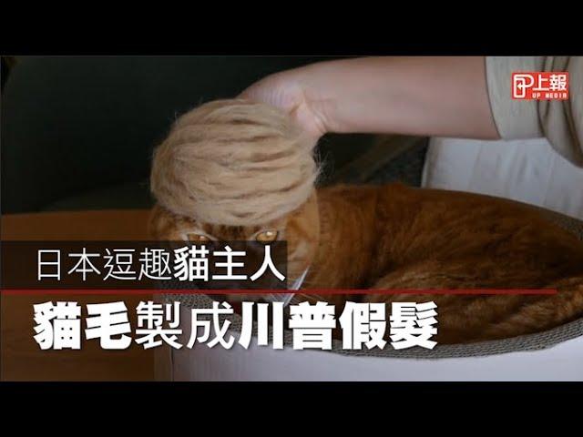 【可愛片】日本貓奴創意無限 「貓毛」製成川普假髮