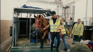 FLYING MY HORSE ACROSS THE WORLD Episode 4|| Chasing the Dream
