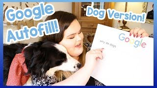 Answering The Web's Most Searched Questions About Dogs! Milo and Leah Answer Your Doggy Questions!