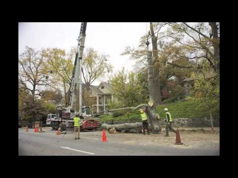 Stonehurst Large Tree Removal by Arborguard