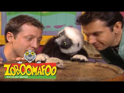 Zoboomafoo Opening