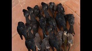 Thợ săn - Buổi bắn chim di cư thu được nhiều chiến lợi phẩm-Gấu Trắng Channel