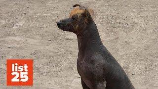 25 Most BIZARRE Dog Breeds