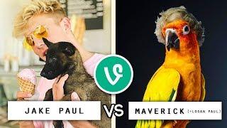 Jake Paul vs Maverick (+ Logan Paul) Vine Battle / Who's the Best