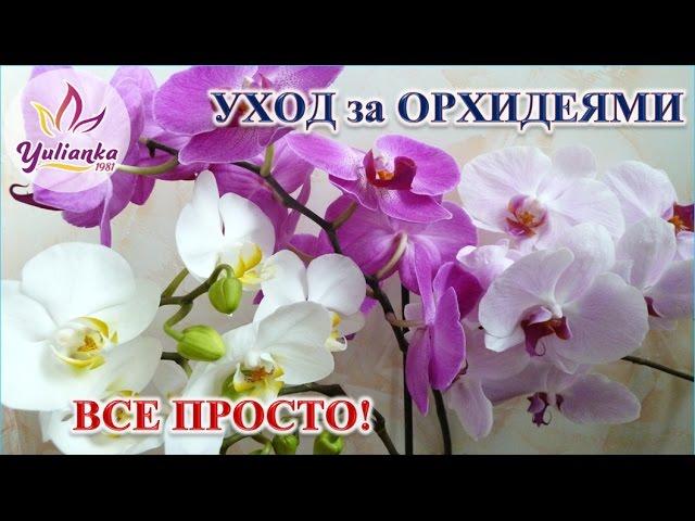 Основні принципи правильного догляду за Орхідеєю DVDRip Юлія Карпова