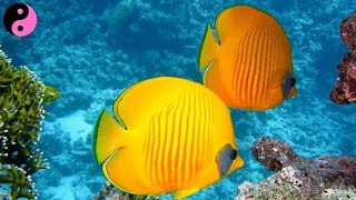 Coral Reef Aquarium with Relaxing Music for Sleeping or Meditation