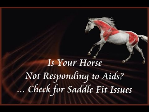 Is Your Horse Not Responding to Your Aids? Check for Saddle Fit Issues.  by Jochen Schleese