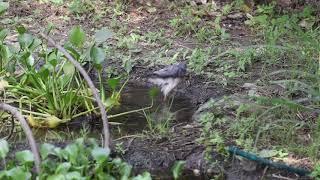 Down by the waterhole