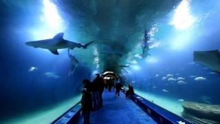 Visitar l'oceanografic