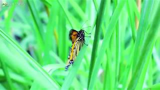 Relaxing Music With Butterflies Birds And Flowers Hour Nature Meditation With Soothing Music
