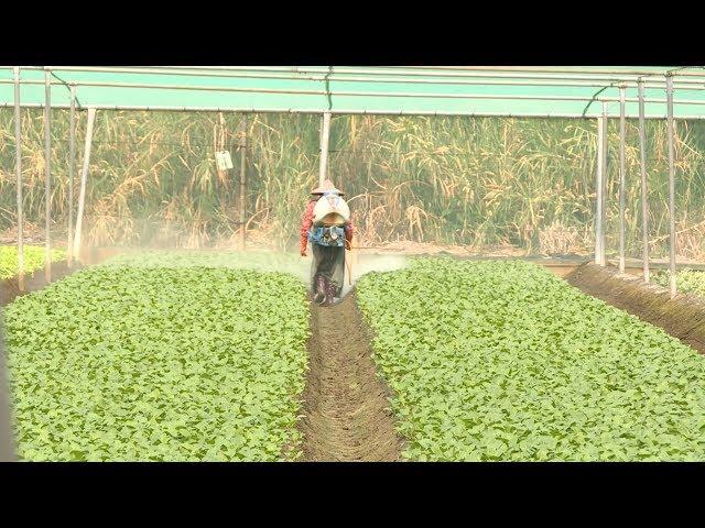 農民職災保險11月上路 每月保費15元