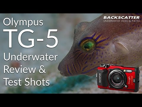 video Olympus Tough TG-5 Digitalkamera (12 MP, 25-100mm 1:2,0 Objektiv, GPS, Manometer, Temperatursensor, Kompass) schwarz