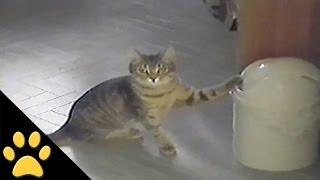 חתול נגד פח אשפה