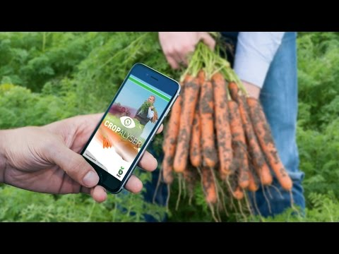 Bejo's Cropalyser App - Analyse your crop