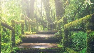 """Peaceful Relaxing Instrumental Music, Meditation Music """"Pathway Through the Forest"""" by Tim Janis"""