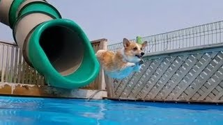 Funny Dogs on Water Slides Compilation (2018)