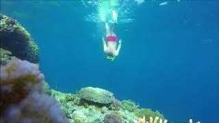 under the sea . . . Sharm el Sheikh, - Egypt شرم الشيخ -