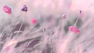 """3 HOURS Best Relaxing Music 'Romantic Piano"""" Background Music for Stress Relief, Therapy, Love"""