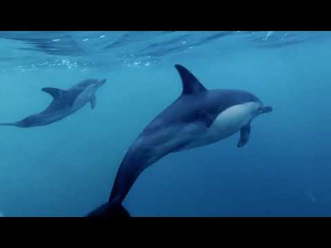 video Auckland Marine Mammal Eco-Safari