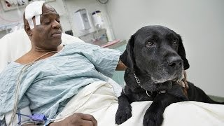 Blind man's tribute to guide dog after being run over by New York subway train