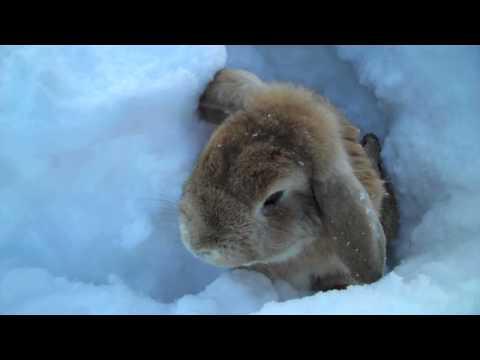 2 snow bunnies eating dick wow - 1 3
