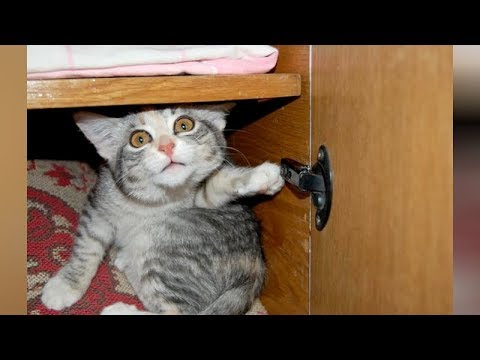 LAUGH extremely hard at FUNNY ANIMALS - Funny ANIMAL VIDEOS compilation